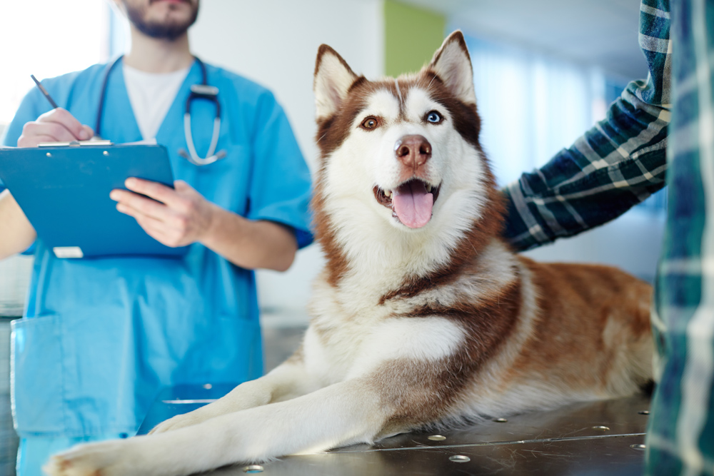 Pet Surgery with the veterinarian
