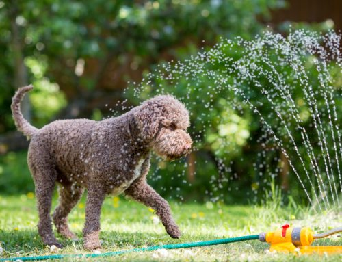 Busted: Common Myths About Pets and Summer Heat