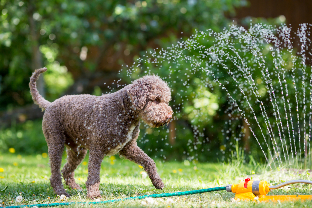 Busted Common Myths About Pets And Summer Heat Urgent Pet