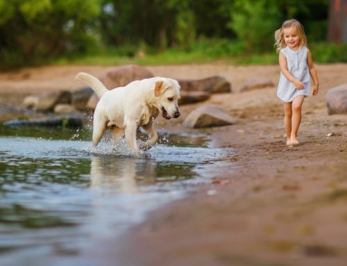 Leptospirosis in Pets