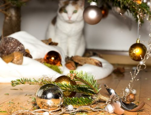 12 Days of Holiday Hazards: How to Pet-Proof Your Home