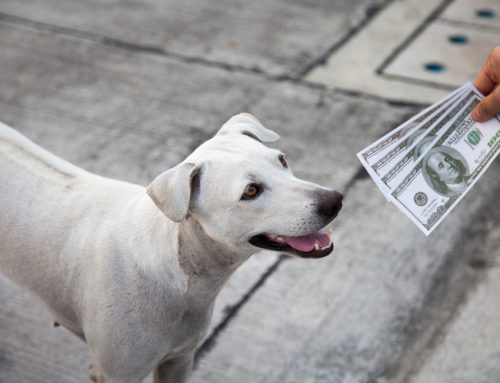 Veterinary Urgent Care: How to Financially Prepare for the Unexpected