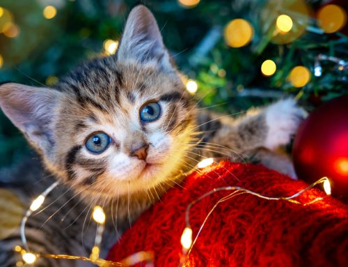 Lessons Learned: The 3 Pets of Christmas Past, Present, and Future