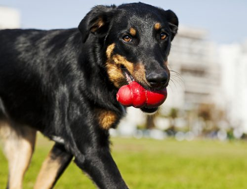 Chew Toys for Pets: The Good, the Bad, and the Unsafe