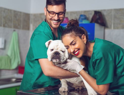 Answering the Call—Recognizing Our Emergency Vet Techs